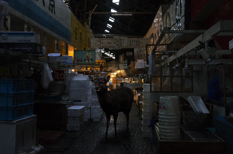 tsukiji_sika01_m